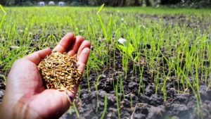 grass seed reviews